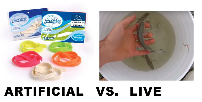 Artificial vs Live Surf Fishing Bait